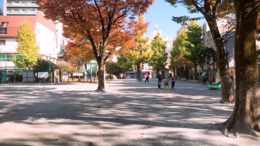 紅葉の綺麗な木がある公園