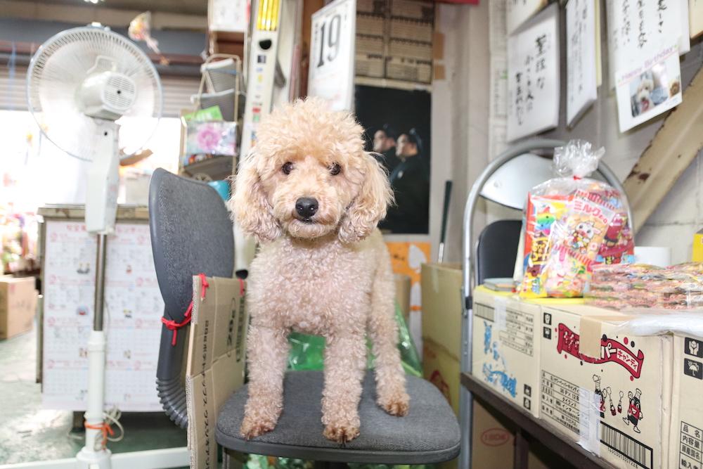 椅子の上に立つ犬