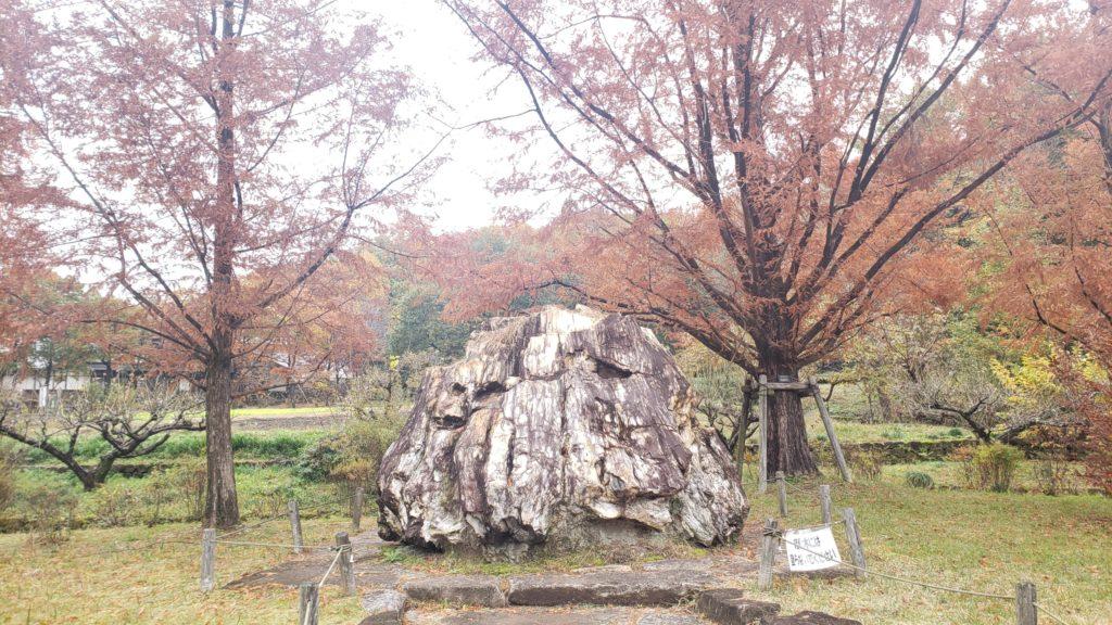 紅葉と大きな岩