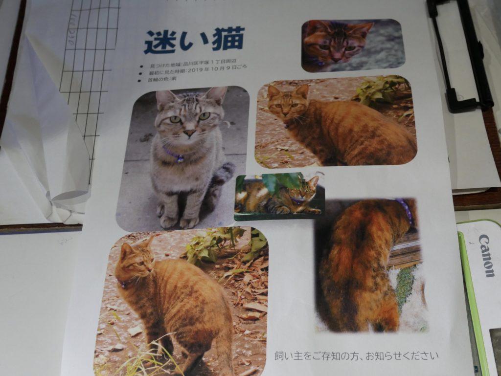 猫の写真が貼られた紙